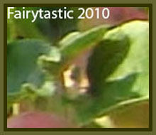Faeries & Nature Spirit Photos