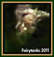 Real fairy