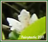Real fairy photography, true fae